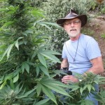 Mel Frank , the Godfather of Cannabis, is leading a special elective course at Oaksterdam University in September 2014.